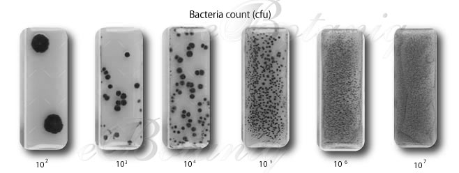 MircoTest-Kit-Bacteria